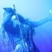 lacuna-coil-live-2014-05